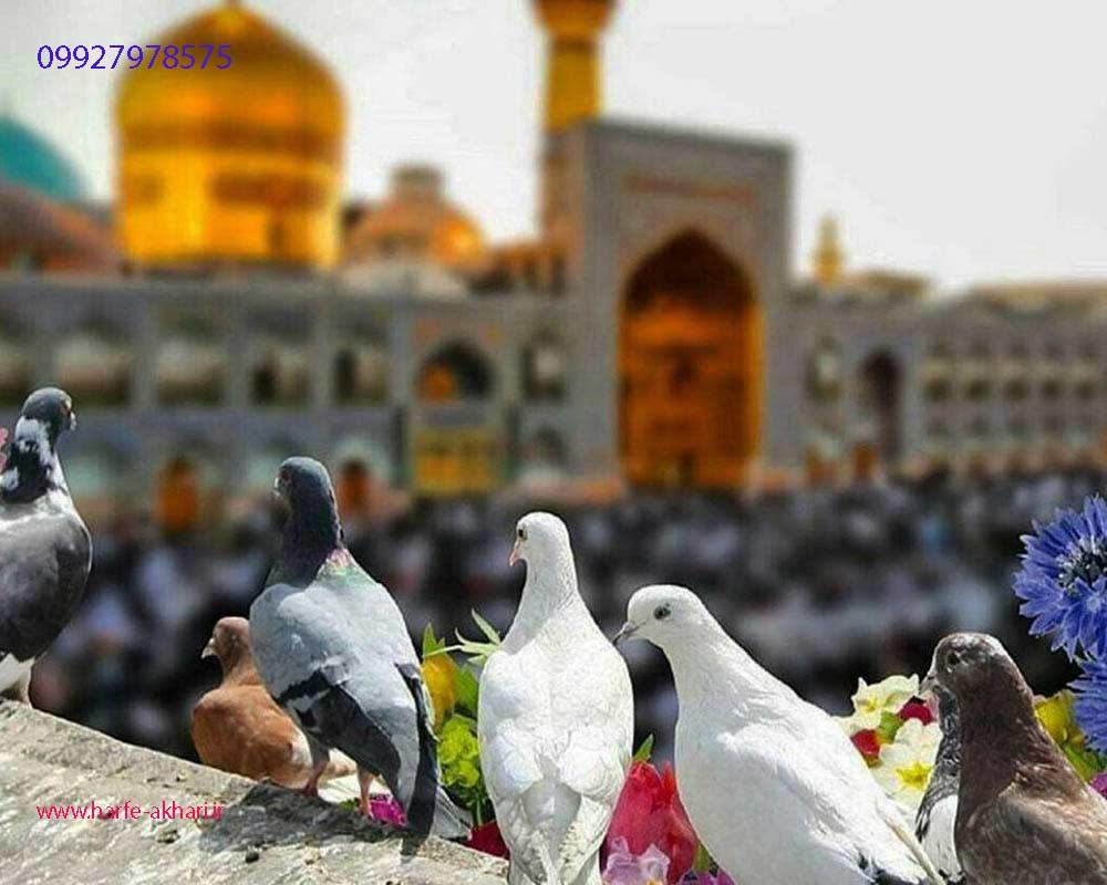 حرف آخر در مشهد